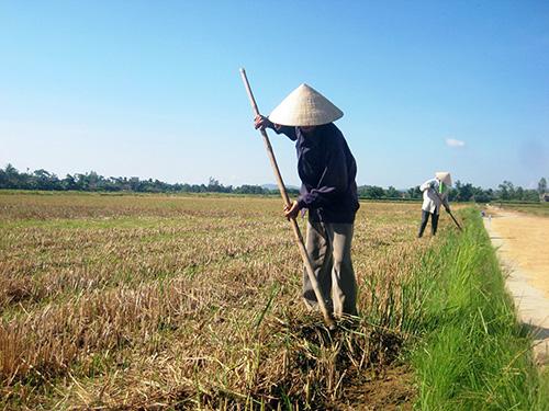 Nông dân tập trung phát dọn cỏ bờ.  Ảnh: Ng.Sự
