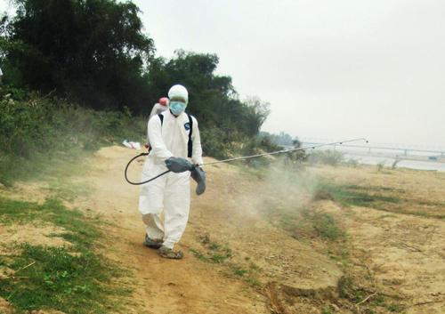 Duy trì thường xuyên khâu phun tiêu độc để kìm hãm nguy cơ bùng phát các loại dịch bệnh. Ảnh: N.S