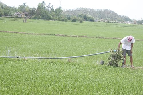 Với sự hỗ trợ của HTX Duy Sơn II, nông dân đã đóng các giếng bơm ngay bờ ruộng để chống hạn.Ảnh: T.LÂM
