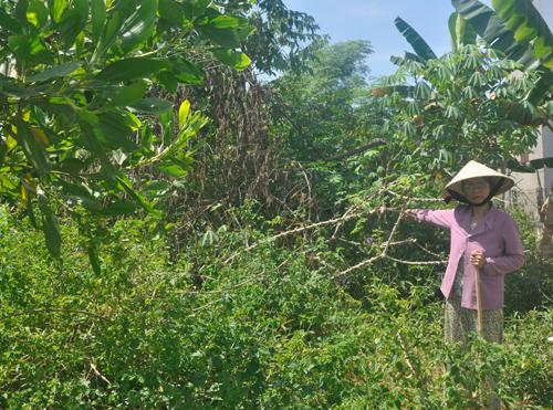 Bà Lê Thị Lý bên diện tích đất đã được UBND huyện Tiên Phước cấp bìa đỏ cho hộ ông Trương Bá Ngọc. Ảnh: H.G