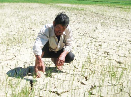 Cần chuyển những chân đất lúa bấp bênh nước tưới sang luân canh và xen canh cây công nghiệp ngắn ngày.