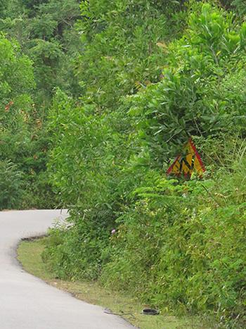 Biển báo chỉ dẫn trên đường bị cây che lấp hoàn toàn.