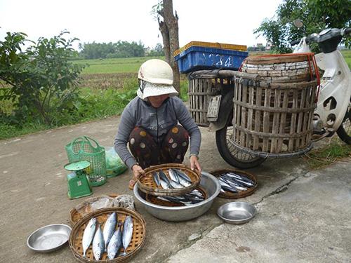 Gánh cá quen đỗ ngay đầu xóm, chờ các mẹ các dì xách rổ chạy ra mua.