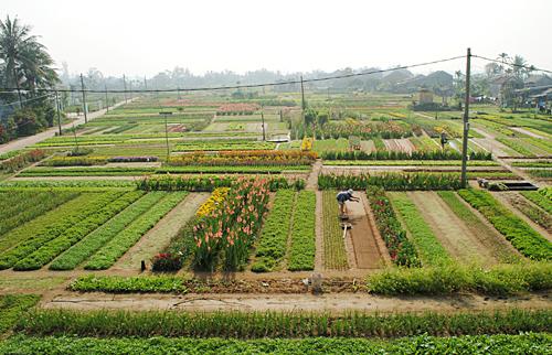 Ngoài sản xuất rau, HTX Cẩm Hà còn mở hướng phát triển du lịch để tăng thêm nguồn thu nhập. Ảnh: T.L
