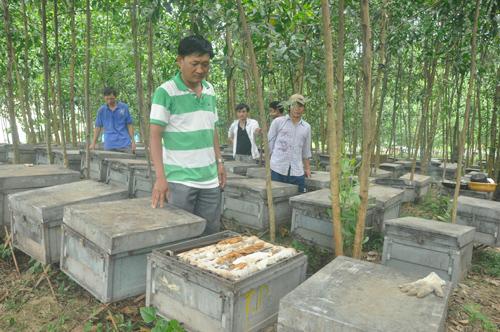 """Ông Lê Thành Thái bên các hộp nuôi ong mật bị lực lượng chức năng xã Trà Đông """"cưỡng chế""""  làm hư hại vào sáng qua 23.7. Ảnh: N.Đ"""