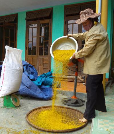 Bà Nguyễn Thị Hải (Phú Ninh) thực hiện công đoạn làm sạch để cho ra hoa ngâu thành phẩm. Ảnh: TƯỜNG QUÂN