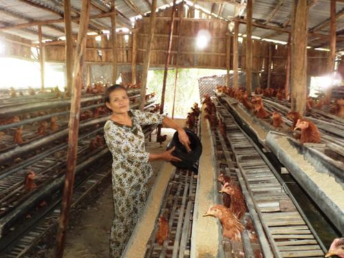 Nông dân Đại Lộc vươn lên làm giàu từ mô hình chăn nuôi.Ảnh: B.L