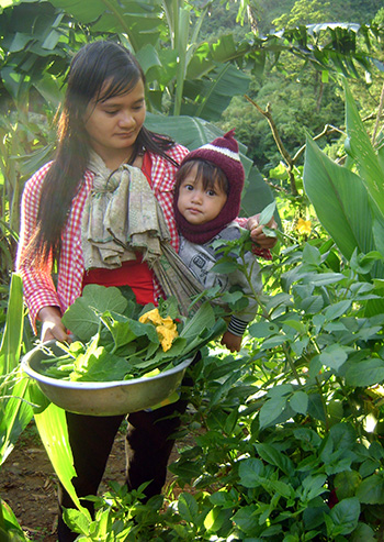 Xen canh cây trồng trên đất rẫy ở Nam Trà My đem lại hiệu quả kinh tế cao.