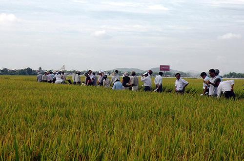 Tham quan mô hình trình diễn trên cánh đồng thôn Trung Vĩnh (Quế Xuân 1, Quế Sơn) sáng 28.8.