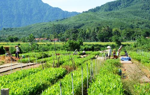 Phong trào trồng rừng phát triển mạnh ở miền núi. Trong ảnh: Một vườn ươm ở xã Phú Thọ (Quế Sơn).Ảnh: HỮU PHÚC