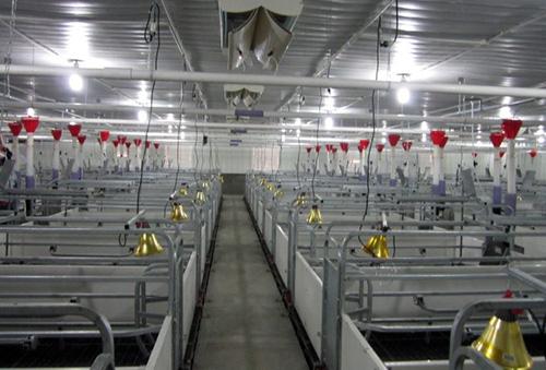 Hệ thống chuồng trại chăn nuôi hiện đại tiêu chuẩn quốc tế của GreenFarm Asia.