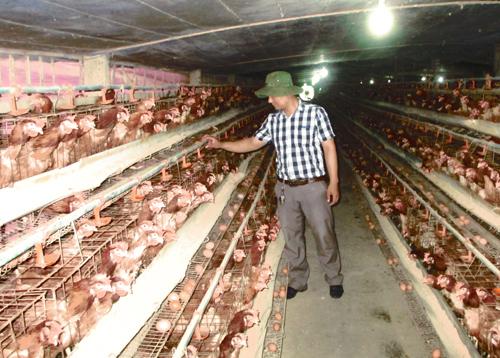 Việc ứng dụng công nghệ để xử lý môi trường được nhiều hộ chăn nuôi quan tâm. Ảnh: B.L