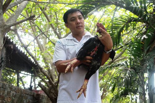 gà Đông Tảo được nuôi tại trang trại của anh Tuấn.
