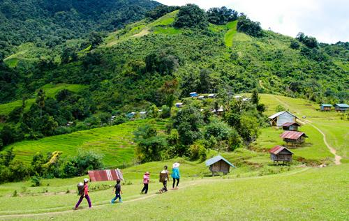 Những phụ nữ Xê Đăng đi qua đồng cỏ về làng.