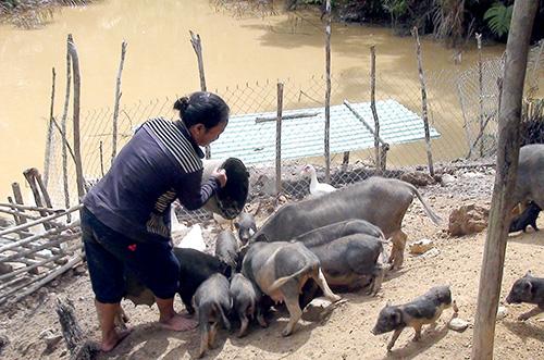 Trang trại của các cán bộ xã Lăng giúp nhiều người dân địa phương về nguồn con giống để phát triển sản xuất.