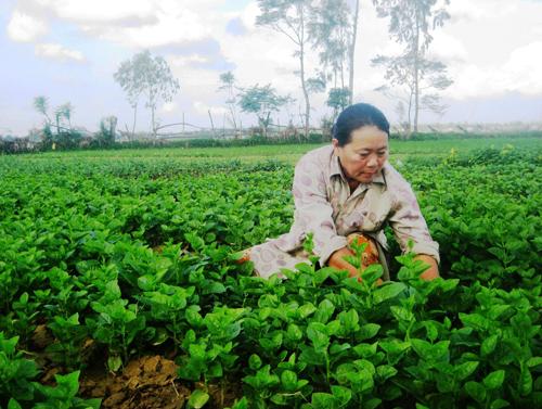 Phong trào thi đua Nông dân SX-KDG góp phần thay đổi đời sống nông dân trên toàn tỉnh. Ảnh: T.L