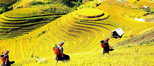 Ruộng bậc thang Mù Cang Chải (Yên Bái).