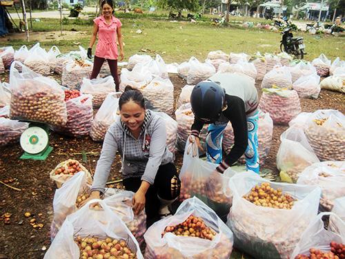 Thương lái miền Tây thu mua đặc sản Tiên Phước tại chợ Tiên Thọ. Ảnh: T.ĐƯỜNG
