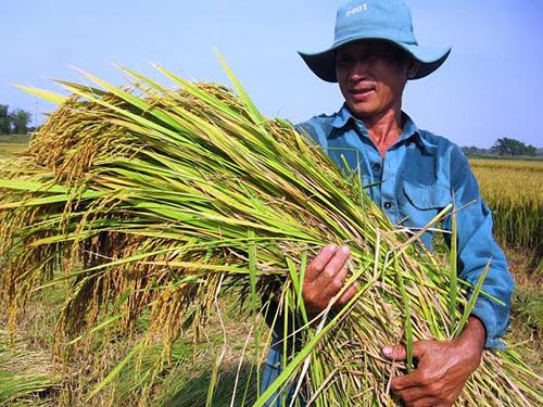 Nông dân rất vui vì cả 2 vụ lúa của năm 2014 đều được mùa.
