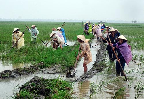 Nông dân xã Duy Thành (Duy Xuyên) tích cực dồn điền đổi thửa xây dựng cánh đồng mẫu. Ảnh: H.N
