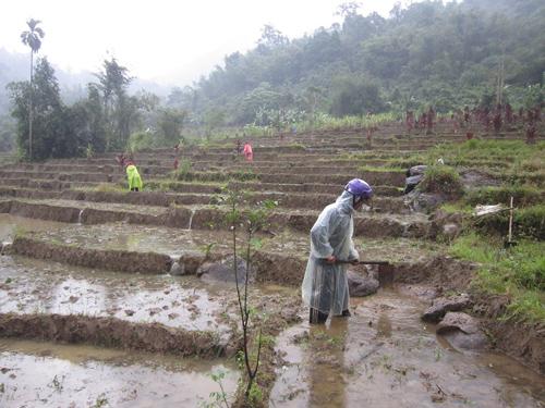 Nông dân chuẩn bị gieo cấy trên cánh đồng Tăk Niên (thôn 1, xã Trà Mai). Ảnh: D.T