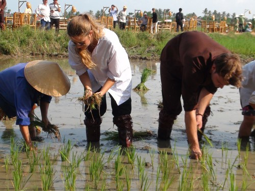 Tourists' rice transplanting