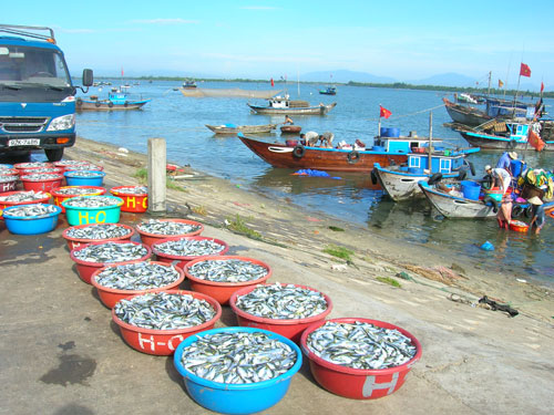 Cuộc điều tra vốn 2015 nhằm xác định chiến lược, định hướng chính sách đầu tư. TRONG ẢNH: Cơ sở hạ tầng nghề cá trên địa bàn tỉnh đang được đầu tư đồng bộ. Ảnh: M.ĐỨC