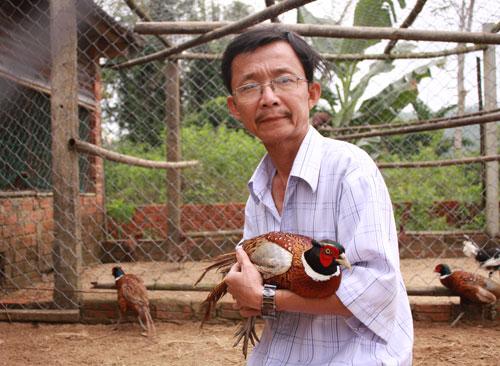 Ông Ngô Khải với con chim trĩ đỏ 8 tháng tuổi.