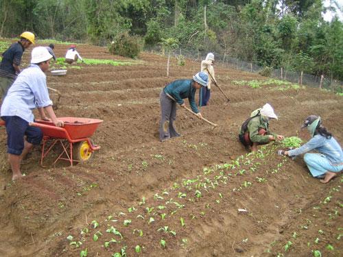 Thời gian qua dòng vốn ngân hàng đã góp phần phục vụ cho mục tiêu phát triển kinh tế nông nghiệp trên địa bàn tỉnh. Ảnh: M.Đ