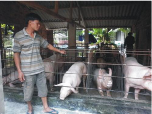 Anh Phạm Văn Dung áp dụng mô hình chăn nuôi heo hướng nạc. Ảnh: N.LINH