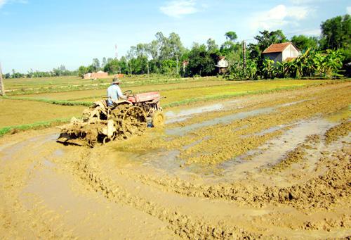 Cơ giới hóa trên đồng ruộng Phú Ninh.
