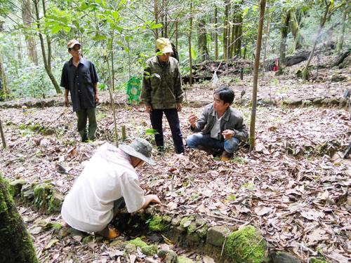 Dân làng Tắk Ngo xã Trà Linh chăm sóc cây sâm. Ảnh: T.H