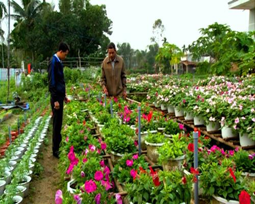 Vườn hoa của Tổ hợp tác Tam Ngọc Flower. Ảnh: HOÀNG BIN