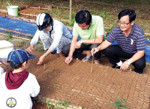 Di thực trồng thử nghiệm sâm tại Tây Giang.  Ảnh: HỮU Phúc