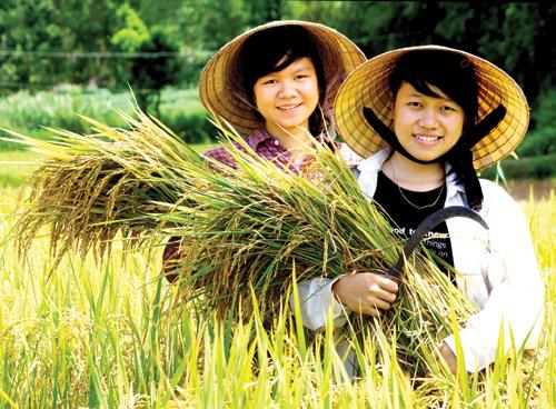 Nông nghiệp vẫn là ngành quan trọng lâu dài đối với Quảng Nam.  Ảnh: PHƯƠNG THẢO