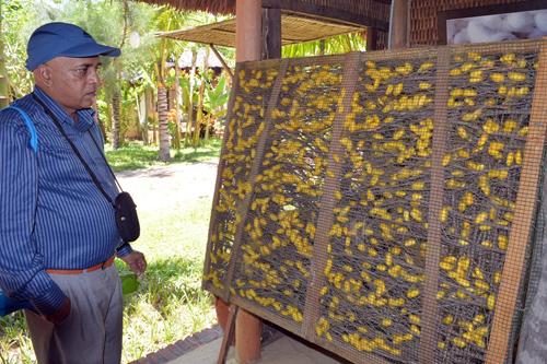 Tham quan Làng lụa Hội An để trải nghiệm quy trình ươm tơ dệt lụa.