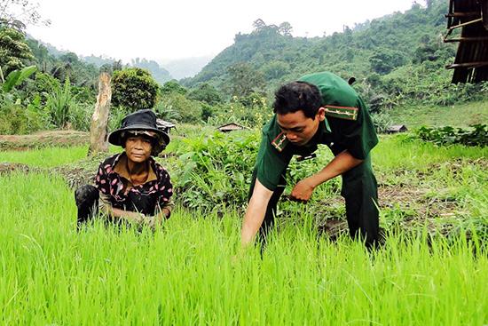 Trung úy Coor Trung hướng dẫn nhân dân làng Pêtapoóc làm lúa nước. Ảnh: Hồng Anh