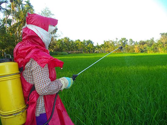 Nông dân phun thuốc trừ sâu để diệt sâu bệnh.