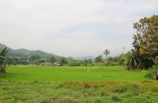 Thôn Sơn giờ đây như được hồi sinh cùng cánh đồng lúa nước xanh tươi.