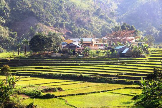 Xanh thắm ruộng lúa nước ở vùng cao.