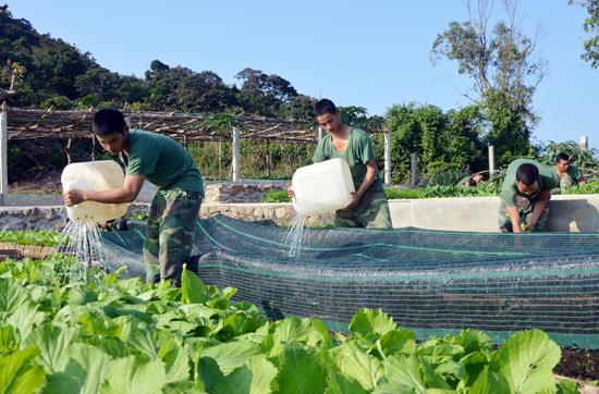 Đẩy mạnh tăng gia sản xuất, bảo đảm lượng rau xanh cho bộ đội.Ảnh: TUẤN ANH