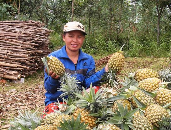 Bà Nguyễn Thị Lanh (Đại Thạnh, Đại Lộc) thu được 40 triệu đồng từ 10 sào thơm. Ảnh: MAI LINH