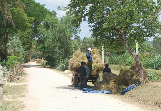 Nông dân xã Tam Mỹ Tây thu hoạch lúa chở về nhà. Ảnh: TAM MỸ