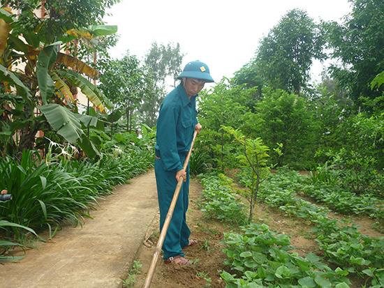 Vườn rau tăng gia của Tiểu đội dân quân trật tự phường Điện Dương.Ảnh: PHAN SƠN
