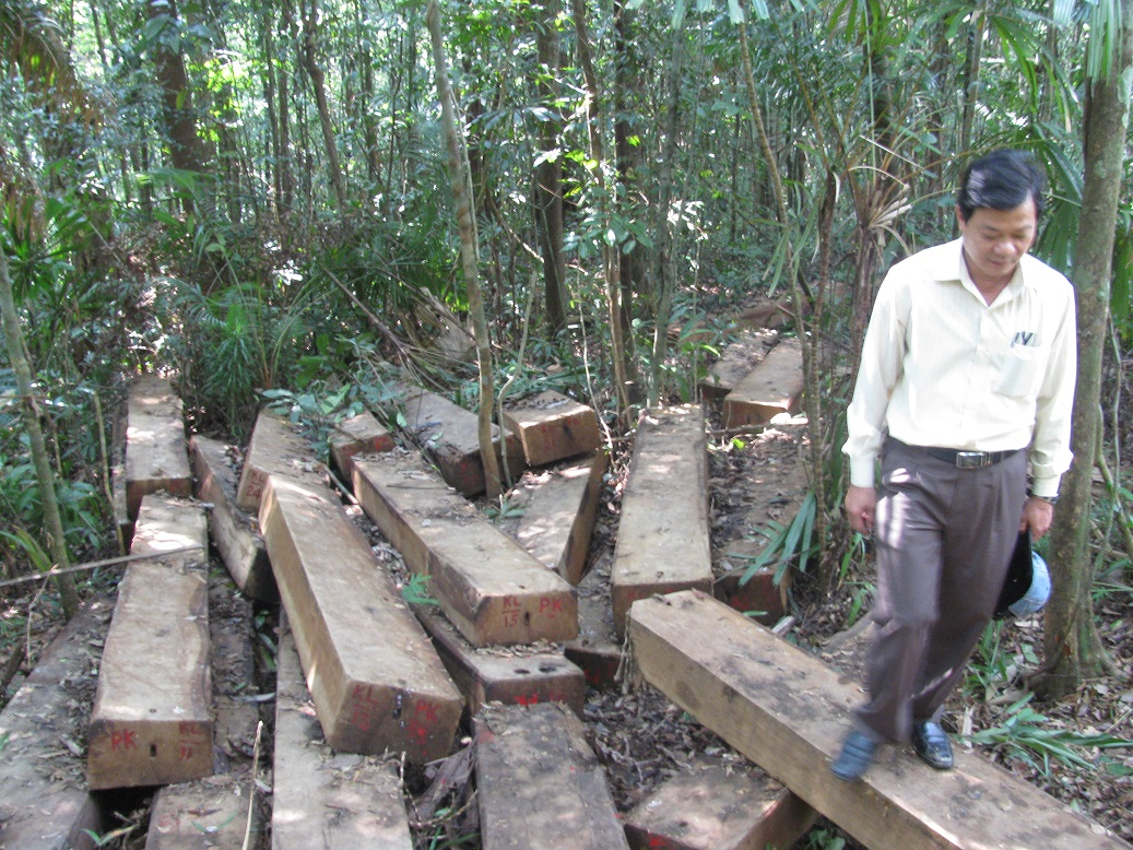 Đường dây chặt phá rừng được phát hiện là đường dây quy mô lớn nhất từ trước tới nay tại khu vực rừng đặc dụng Bà Nà – Núi Chúa