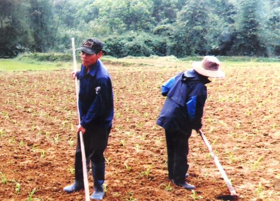 Nguồn nước tưới chỉ đảm bảo cho cây lúa ở huyện Phước Sơn, còn nhiều diện tích cây rau màu phải trông chờ vào nước trời. Ảnh: B.LIÊN