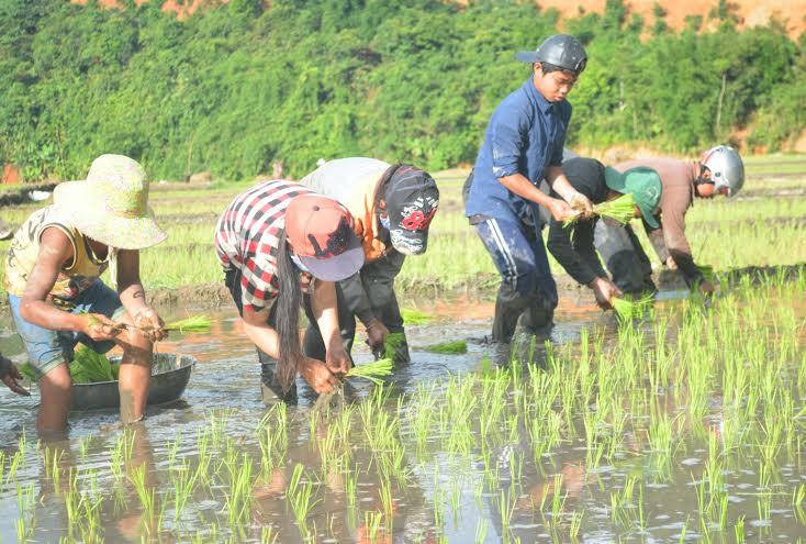Ngày hè, nhiều em nhỏ ra đồng phục vụ việc gieo cấy.