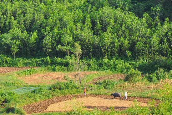 Nhân dân xã Tam Lộc quyết tâm giữ rừng đầu nguồn Ma phan xanh mãi. Ảnh: X.NGHĨA