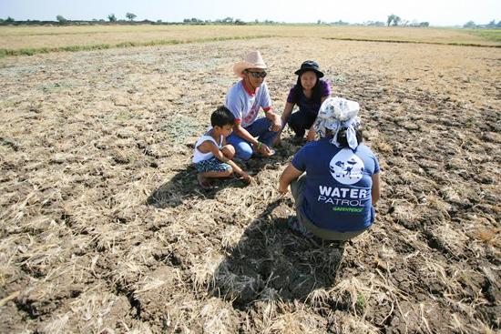 """Khô hạn đang """"đốt cháy"""" nhiều cánh đồng lúa tại Thái Lan. ảnh: Greenpeace"""