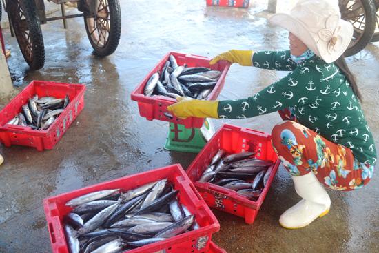 Tiếp cận được vốn vay lưu động theo Nghị định 67, ngư dân sẽ tránh bị ép giá đầu ra hải sản. Ảnh: N.Q.V